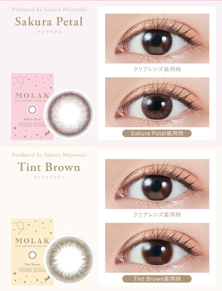 サクラペタル Sakura Petal 、ティントブラウン Tint Brown